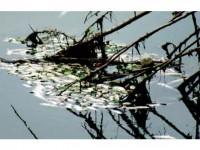 Peștii morți de pe Suha, un incident de mediu cu autor încă necunoscut