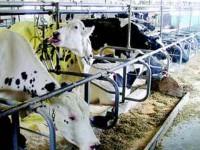 Producătorii care nu depun declarația anuală riscă retragerea cotei de lapte