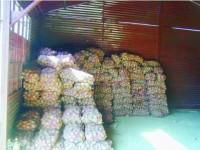 Marii cultivatori nu pot recolta cartofii din cauza pământului tare ca stânca