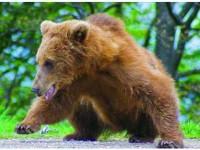 Măsuri împotriva animalelor-problemă care pun în pericol siguranța cetățenilor