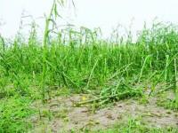 Fenomenele hidro-meteorologice periculoase au provocat stricăciuni de peste 35,8 milioane de lei