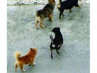 Trei întrebări despre câinii comunitari