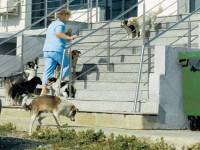 Consilierii locali suceveni reiau procedura de asociere în vederea prinderii câinilor vagabonzi